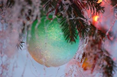 Christmas Tossicia