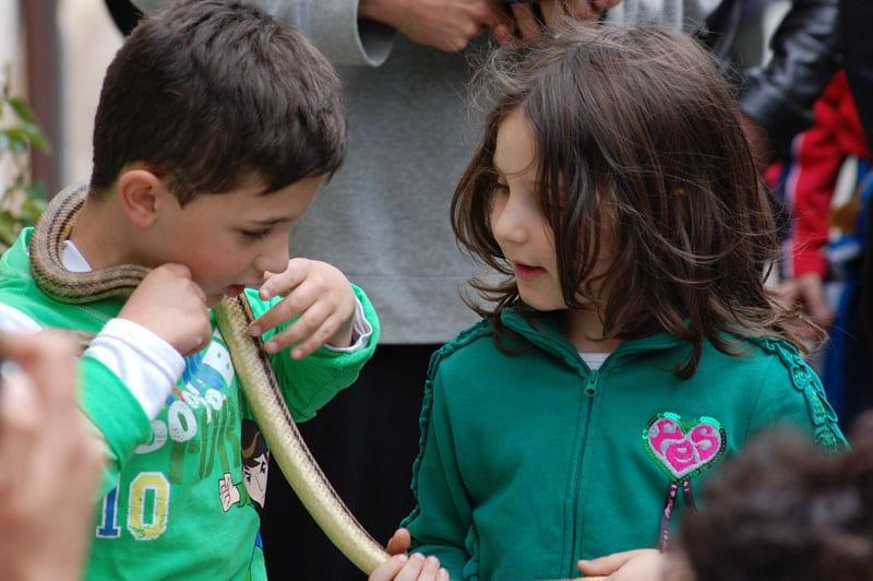 Cucollo Snake Festival