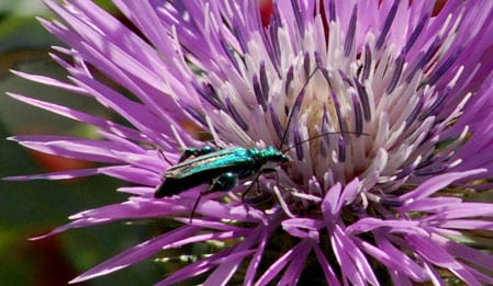 Brightly coloured bugs attracted to Punta Aderci