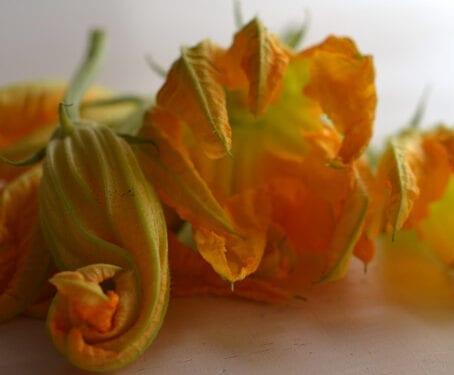 Zucchini blossoms © Lucciola.me