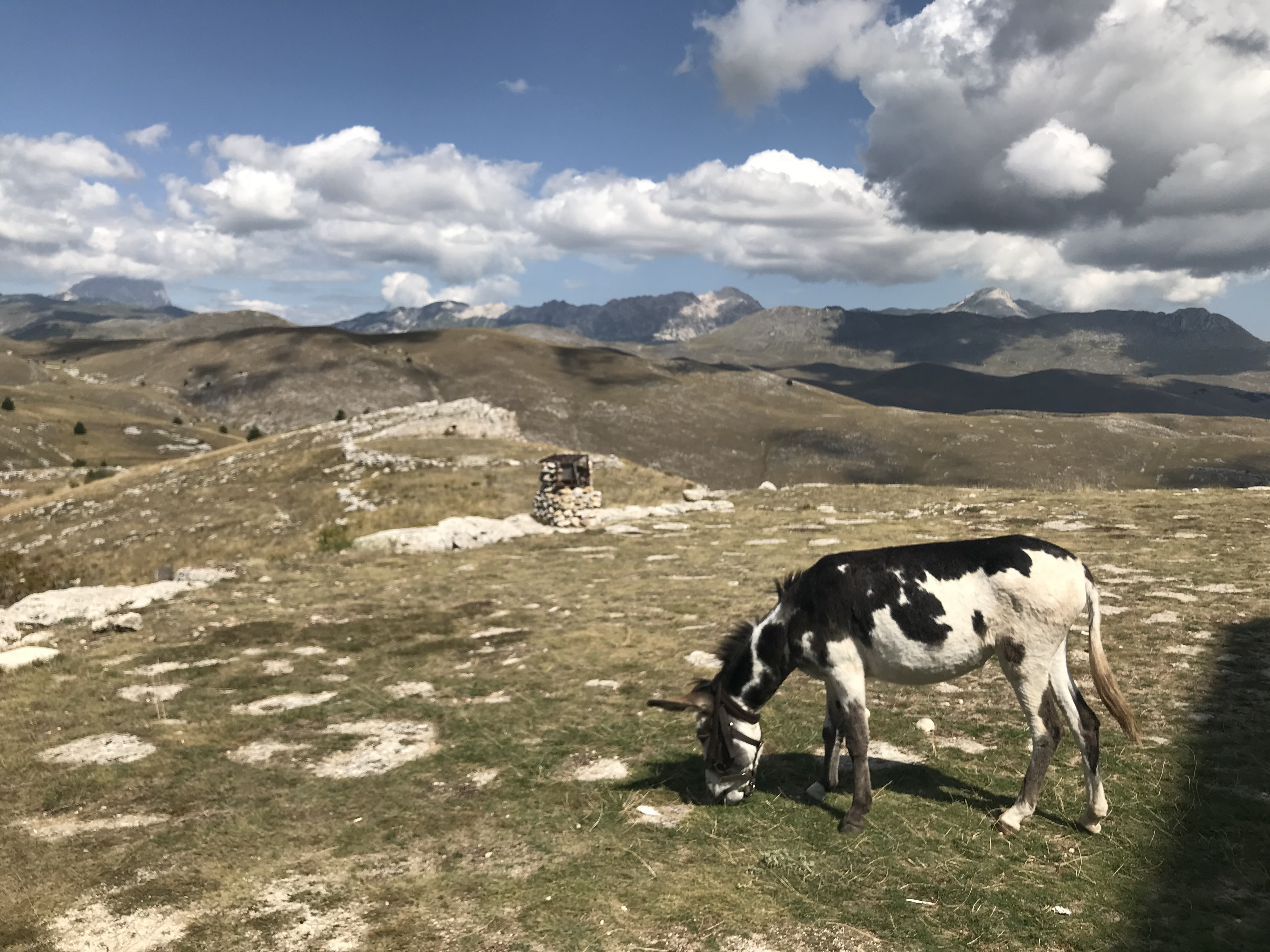 Donkeys Do It Better A Family Trek Together In Abruzzo